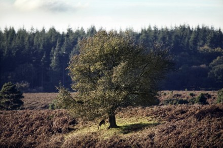 Upon Finding A Solitary Tree