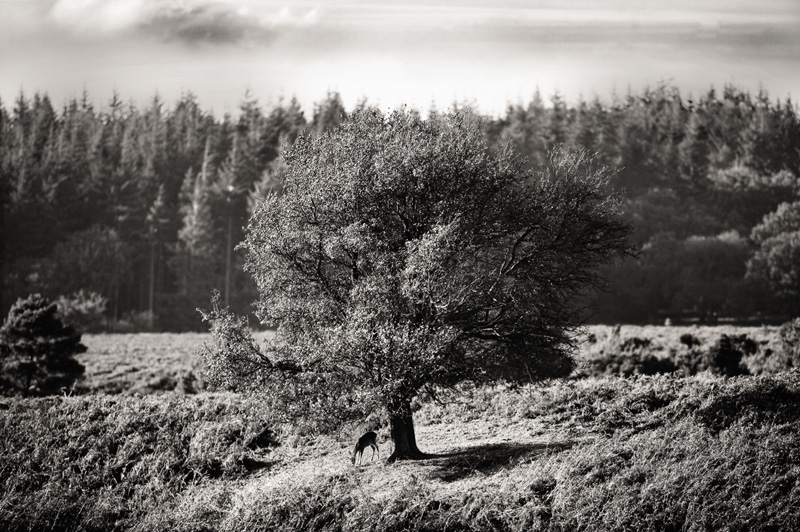 Upon Finding A Solitary Tree No2