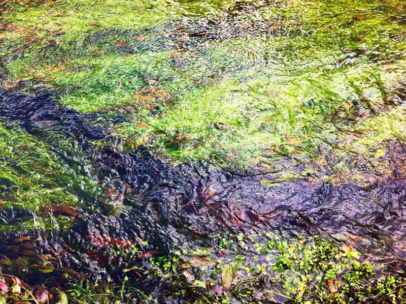 Monet 11 Large