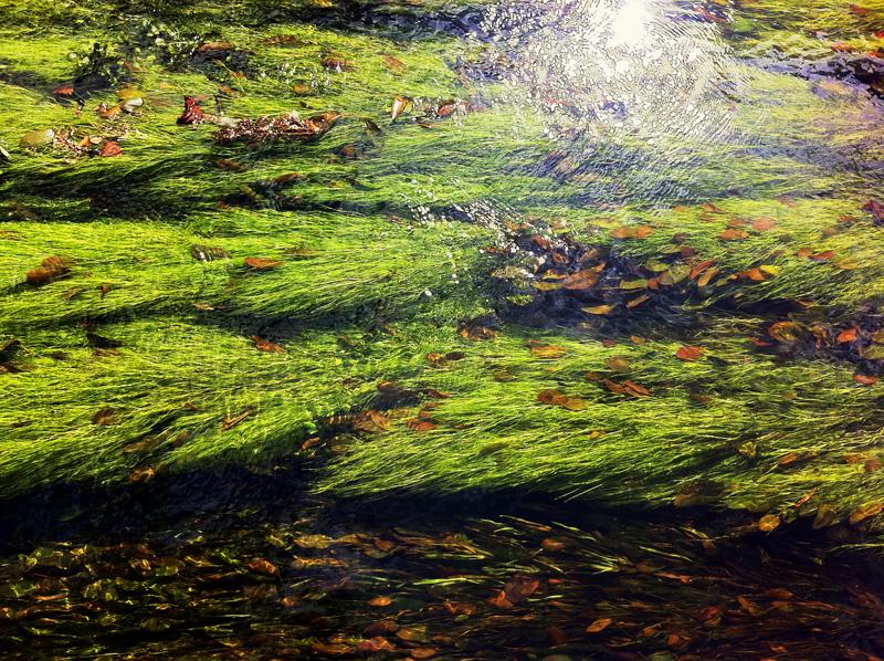Monet 12 Large