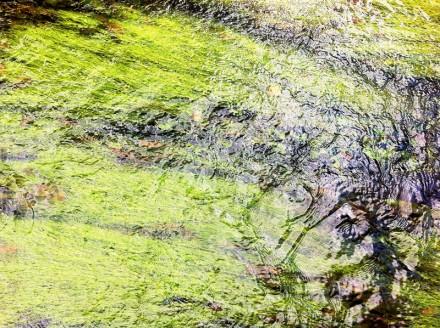 Monet 16 Large