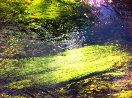 Monet 19 Large