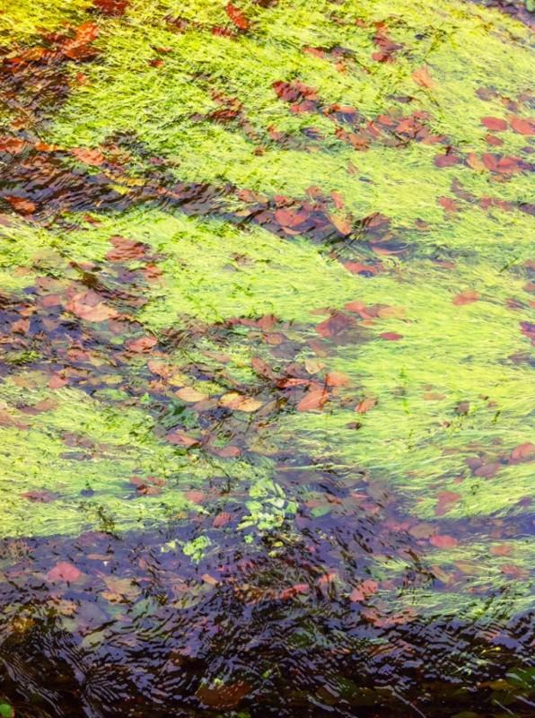 Monet 22 Large