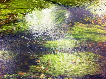 Monet 8 Large