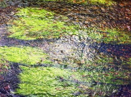 Monet 9 Large